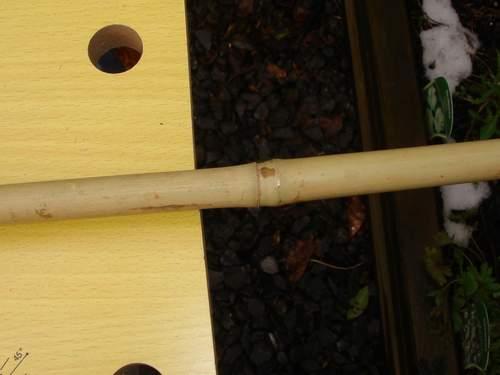 Noeud plein d'une tige de bambou