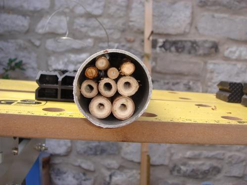 Remplissage du tube PVC avec les tronçons de bambou et / ou de renouée