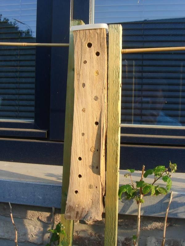 Buche en hêtre, fixée sur un support en bois
