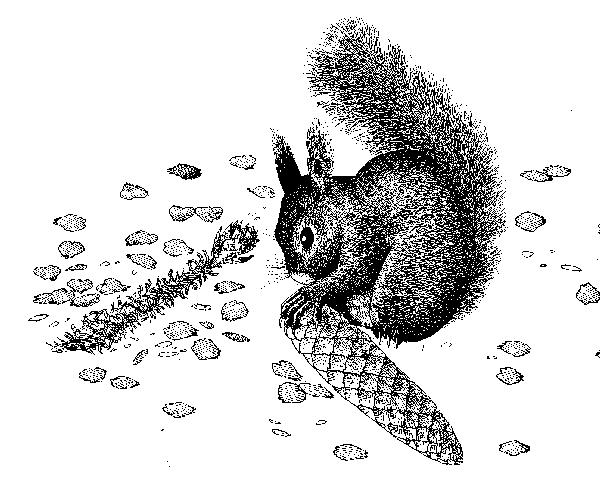 Ecureil